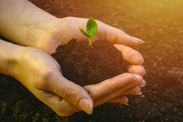 Small green sprout in caring hands against the background of the soil. symbol of new life