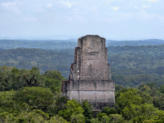 A view from a pyramid height hidden in a dense forest. Nation's most significant Mayan city of Tikal Park, Guatemala