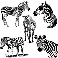 Zebra silhouette set. Vector illustration