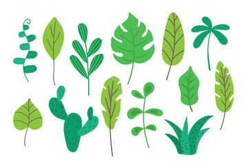 Tropical leaves set isolated on white background. Tropic foliage collection for decoration for cards, banner, poster, product packaging, apparel designs. Summer botany. Vector illustration