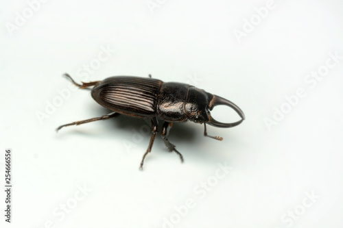 Old-sculptured stag beetle isolated on white background