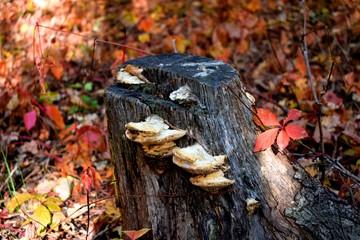 Tinder on stump
