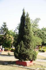 green tree for christmas