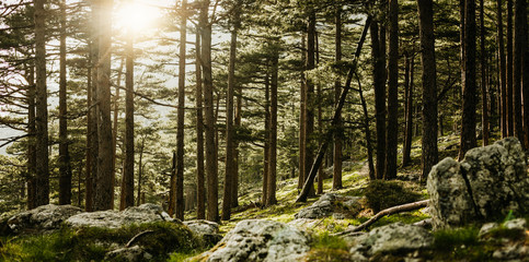 Panorama einer Waldlichtung auf Korsika