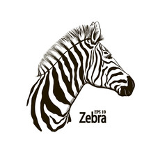 Zebra beautiful animal pattern