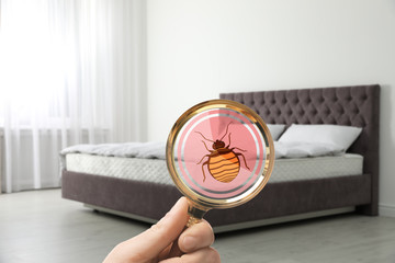 Woman with magnifying glass detecting bed bugs on mattress, closeup