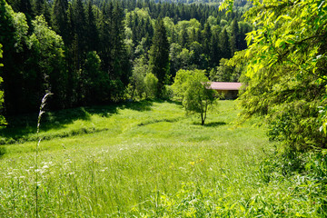 meadow in summer of black forest