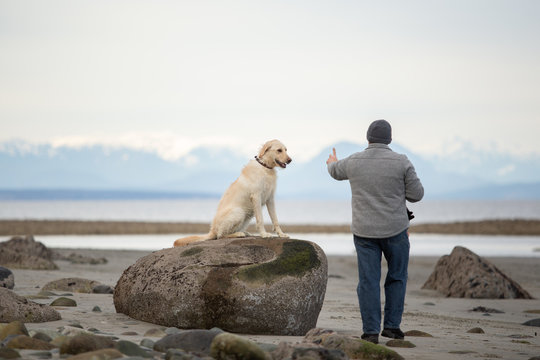 Owner training his dog to stay