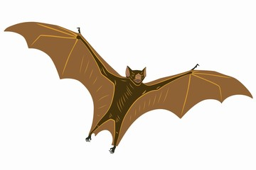 illustration of a bat, vector draw
