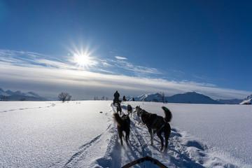 Hundeschlitten im Winter in Norwegen