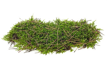 Green forest moss on a white background