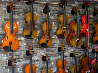 violins standing on the wall in a music store. many wooden violins