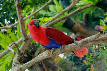 red parrot sitting on branch
