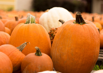 Close-up of pumpkins on field at farm