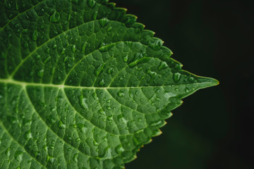 Close up of water drops on leaf