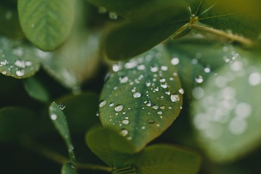 High angle close-up of water drops on plants during rainy season