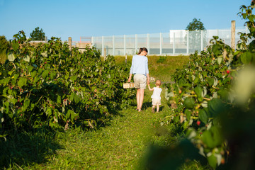 Mother and little daughter picking raspberries in summer