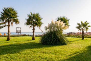 Refreshing seaside palm trees and grass lawns garden park in summer morning. Heraklion Crete beach park. Travel, relaxation, vacation concept