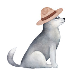 Friendly adorable sled dog puppy wearing light brown felt campaign hat. Sitting, side view, gray fluffy coat. Hand painted watercolour graphic sketch, cutout clip art element for creative design.