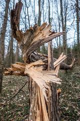 Umgestürzter Baum durch Sturm