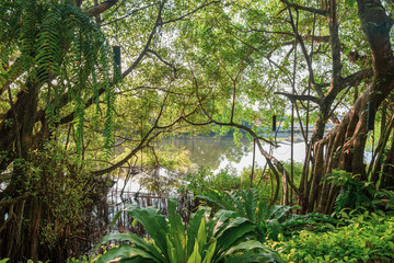Natural greenery retreat atmosphere under shade and shadow in mangrove forest on river bank.