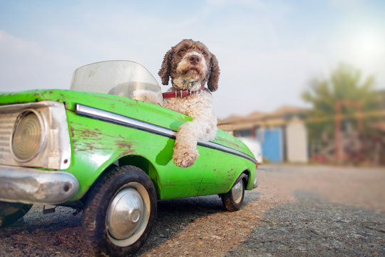 cute dog driving small retro car