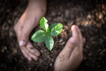 Hand protects seedlings that are growing, Environment Earth Day In the hands of trees growing seedlings, reduce global warming, concept of love the world. Wall mural