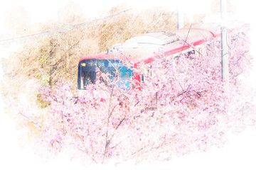 桜と電車 Cherry Blossoms. Illustration of watercolor painting style.