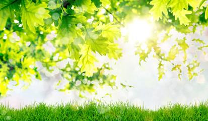 Summer Spring Nature Background