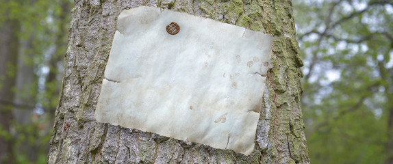 Papier am Baum als Banner mit Textfreiraum
