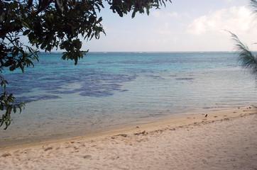 Beach view in Moorea Island