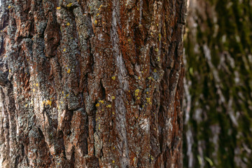 Closeup view of texture of bark of old tree trunk growing outside in forest. Horizontal color photography.