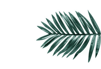 Tropical leaves foliage plant close up with white copy space background.Nature and summer concepts ideas