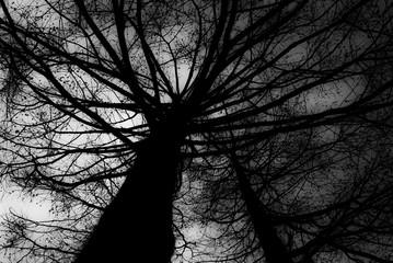 不気味な木々