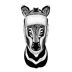 Zebra, horse. Boxer animal. Vector illustration for t-shirt. Sport, fighter isolated on white background. Fitness illustration of strong person