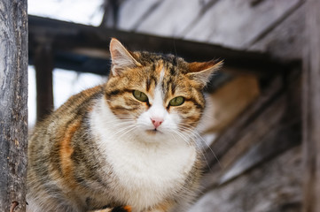 Cute cat doing observation. While standing around