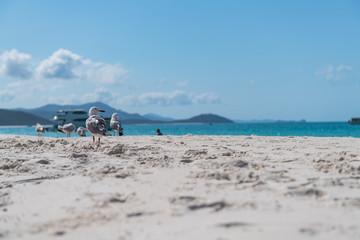 Möven am Sandstrand, im Hintergrund Meer