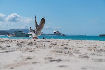 Möwen am Sandstrand starten zum Flug