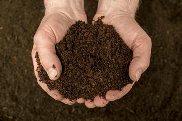 Kompost - natürlicher Dünger in der Hand