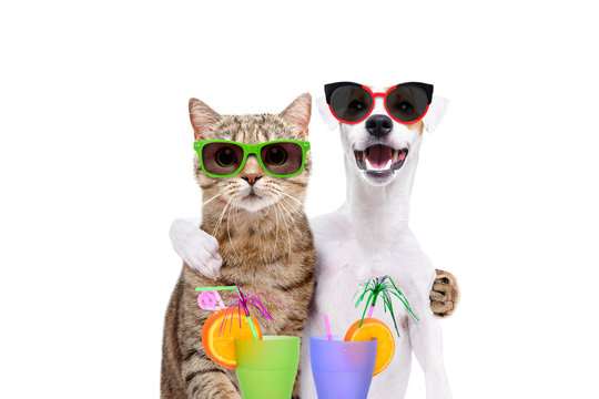 Portrait of a dog Jack Russell Terrier and cat Scottish Straight in sunglasses, hugging each other, holding cocktails in paws, isolated on white background