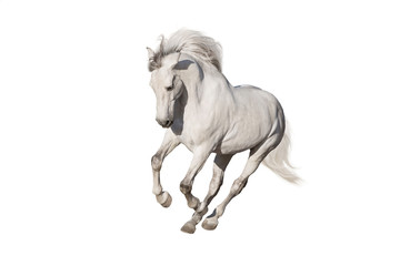 Wall Mural - White horse isolated on white background