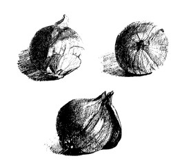 Hand drawn sketch onions. Whole root composition.