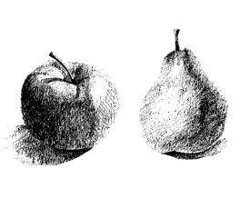 set of vintage images of fruits on a white background , a pear and an apple isolated sketch