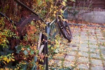 Garten  mit Holzrädern, bunte Farben, Herbst und Vogelbeeren
