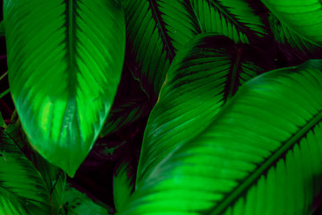 Tropical plant leaves moody background with copy space
