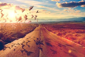 Carretera y concepto de viajes y aventuras.Palomas volando y concepto de espiritualidad y encontrar el camino de la fe. Wall mural