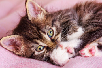 a small fluffy kitty lies on a pink blanket