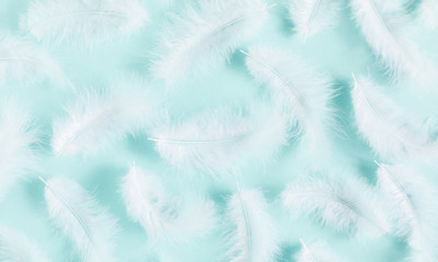White feathers on pastel blue background. Flat lay, top view, copy space
