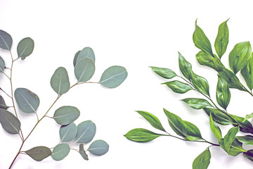 Branches of flowers with green leaves on a white background, isolate