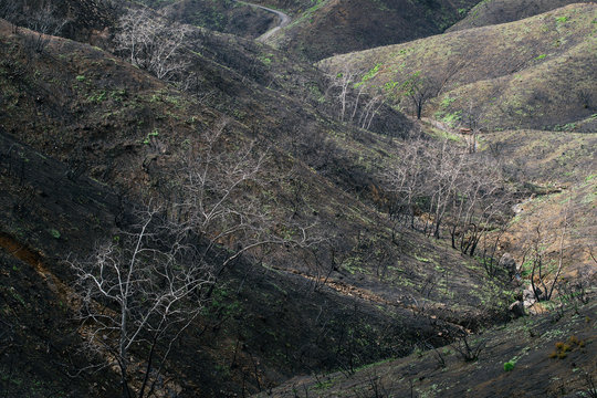 Environmental Conditions of Santa Monica Mountains Three Months After Woolsey Fire and Winter Storms